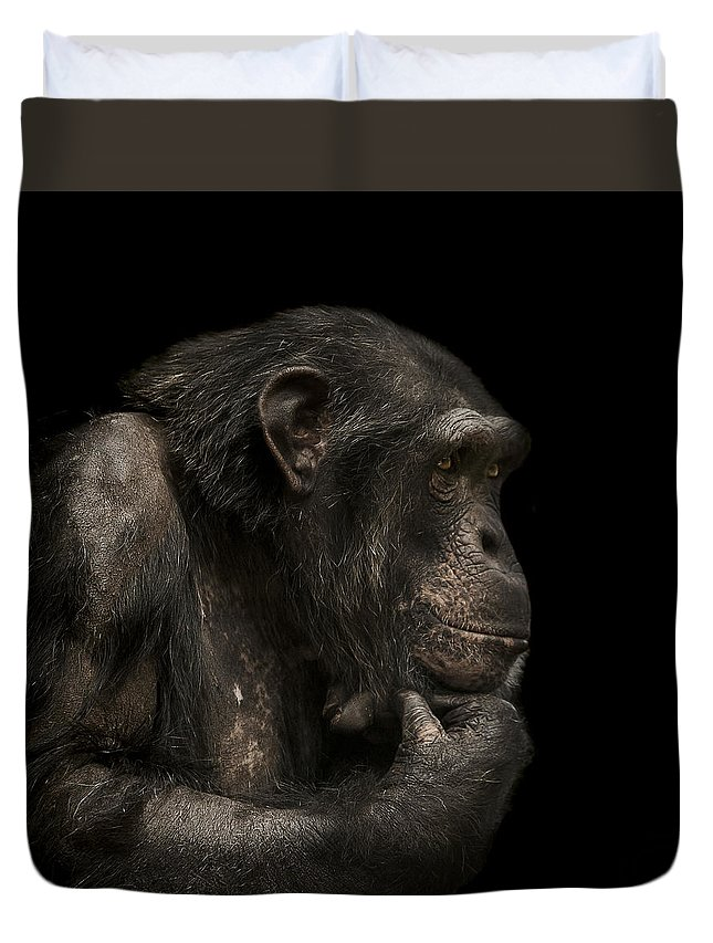 Chimpanzee Duvet Cover featuring the photograph The Listener by Paul Neville