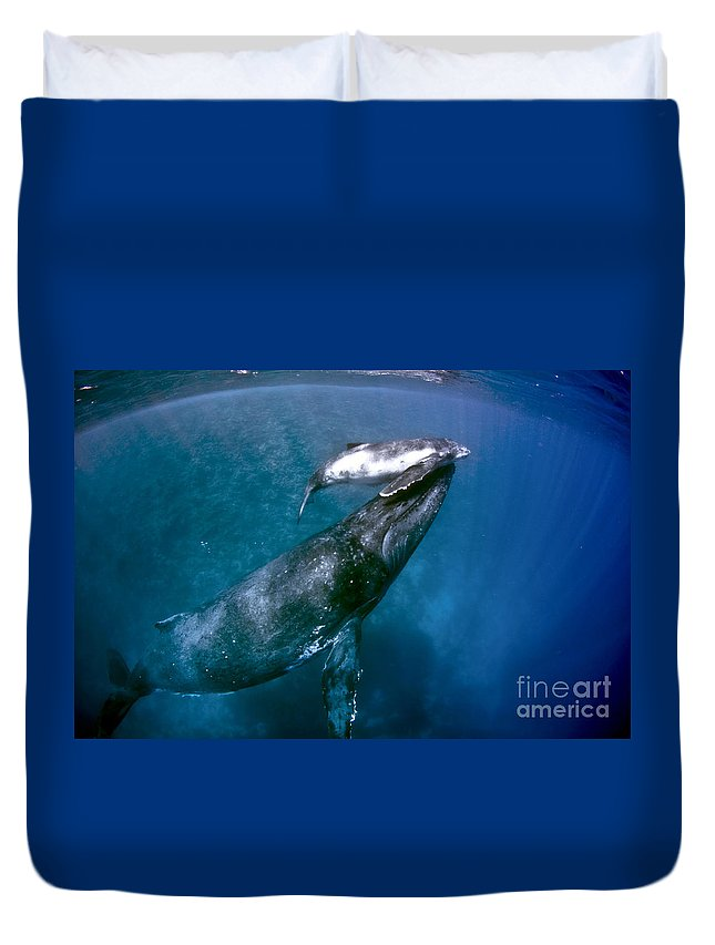 Humpback Duvet Cover featuring the photograph The Newborn by Tim Rock