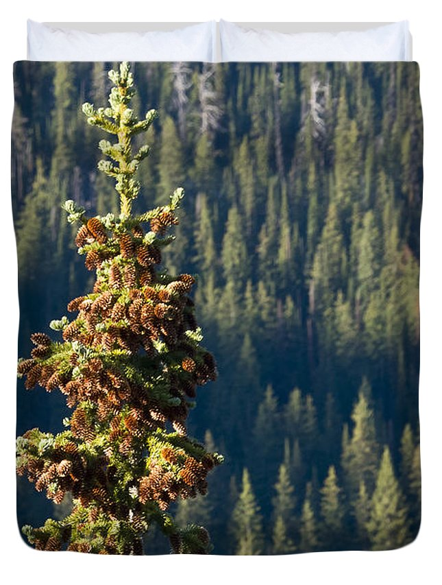 Trees Duvet Cover featuring the photograph The Next Generation by Albert Seger