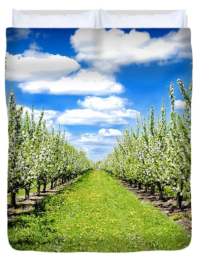 Apples Duvet Cover featuring the photograph The Orchard by Greg Fortier