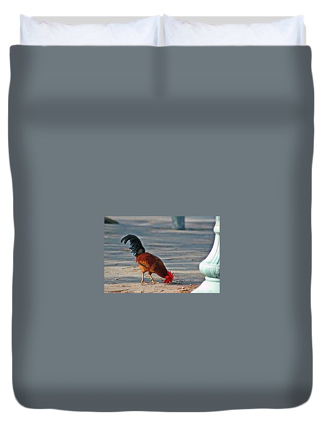 Rooster Duvet Cover featuring the photograph The Picking Rooster by Susanne Van Hulst