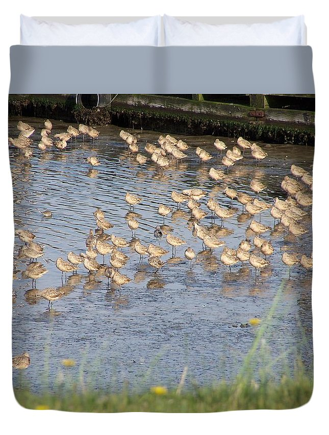 Seabirds Duvet Cover featuring the photograph The Plovers by Laurie Kidd