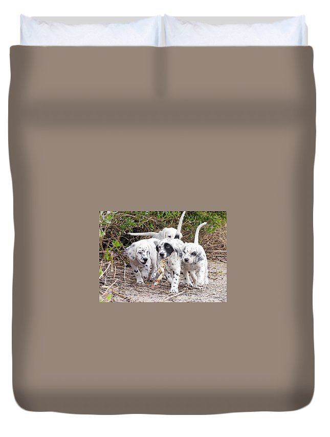 English Setter Duvet Cover featuring the photograph The Puppy's Prize by Scott Hansen