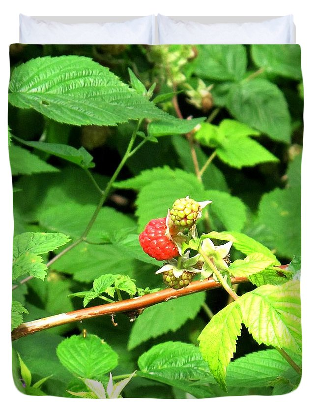 Rasberry Duvet Cover featuring the photograph The Rasberry Patch by Ian MacDonald