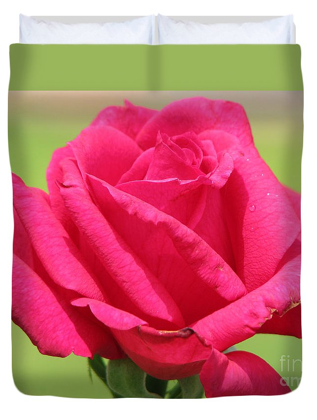 Roses Duvet Cover featuring the photograph The Rose by Amanda Barcon