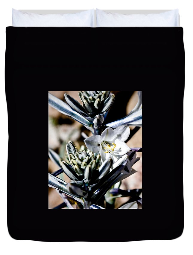 Desert Lily Duvet Cover featuring the photograph The Shy Desert Lily by Chris Brannen