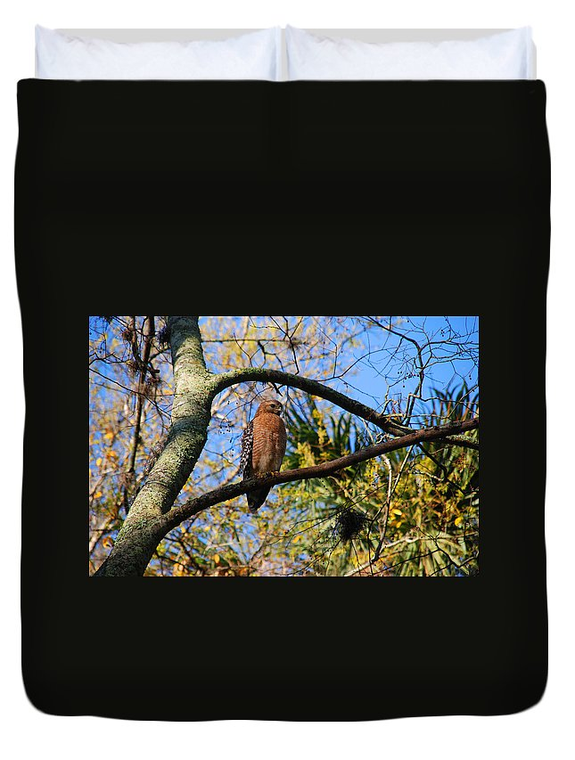 Buzzard Duvet Cover featuring the photograph The Supervisor by Susanne Van Hulst