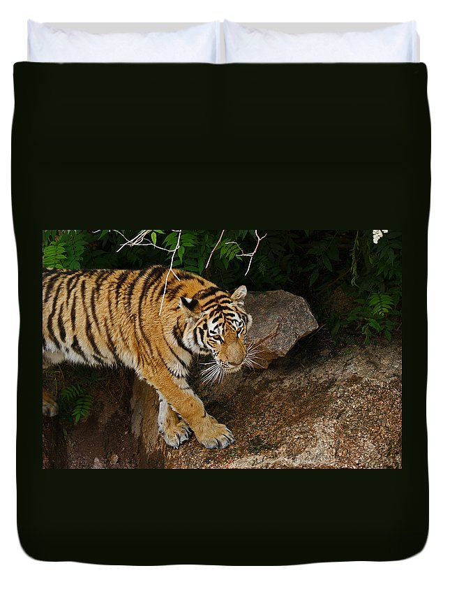 Tiger Duvet Cover featuring the photograph The Tiger by Ernie Echols