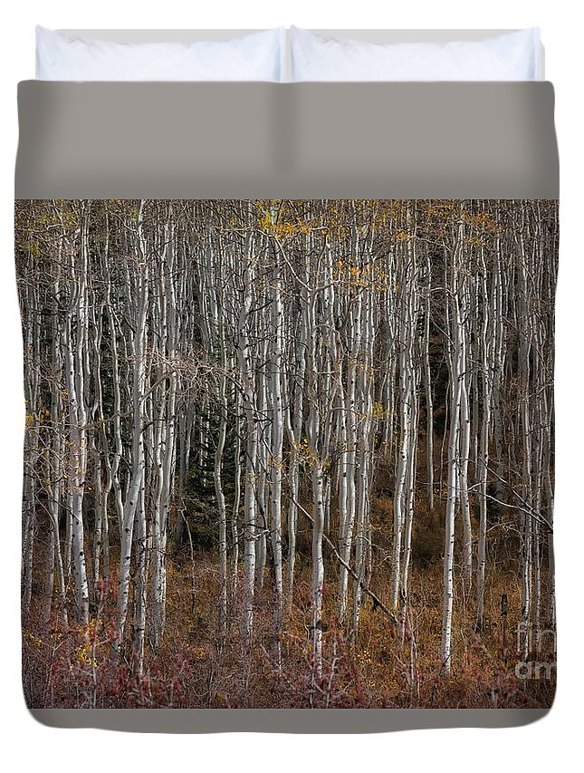 Usa Duvet Cover featuring the photograph The Tight Aspens by Mitch Johanson