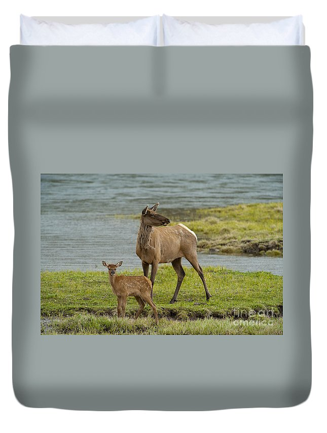 Elk Duvet Cover featuring the photograph The Two Of Us by Sandra Bronstein