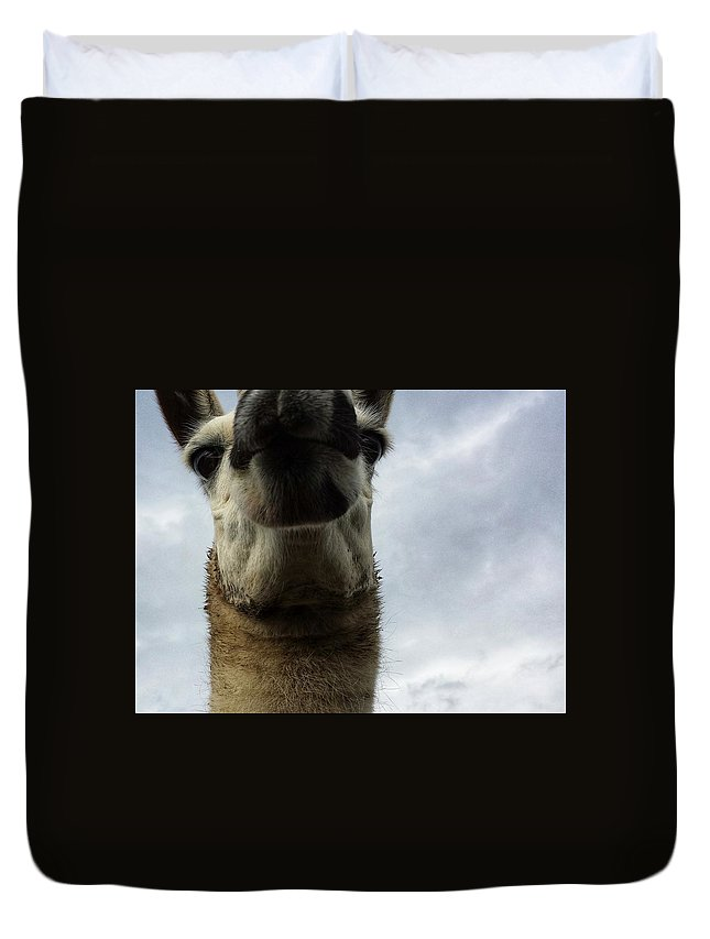 Llama Duvet Cover featuring the photograph Thinking About It by Constance Lang