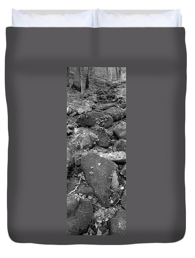 Trees Duvet Cover featuring the photograph Thirsty For Water by Edward Smith