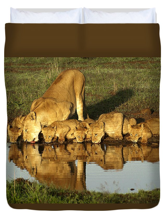 Lion Duvet Cover featuring the photograph Thirsty Lions by Michele Burgess