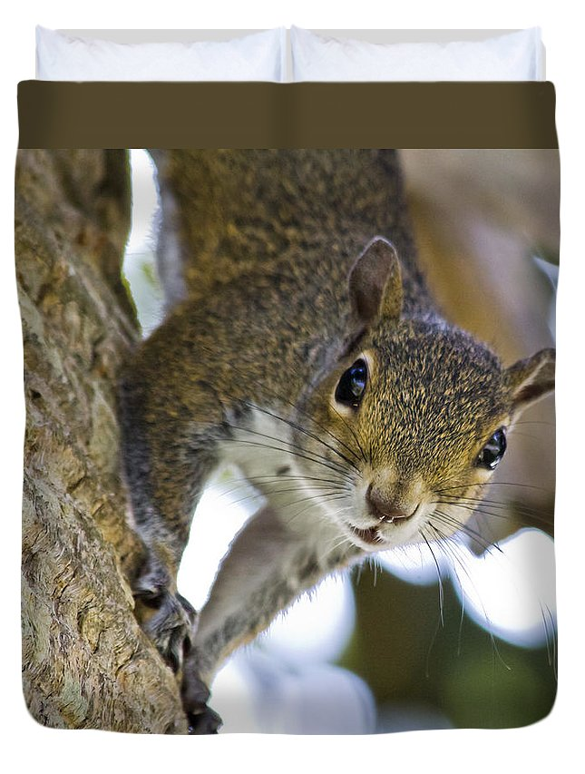 Squirrel Duvet Cover featuring the photograph This Is My Tree by Roger Wedegis