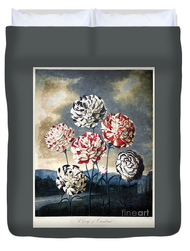 1803 Duvet Cover featuring the photograph Thornton: Carnations by Granger