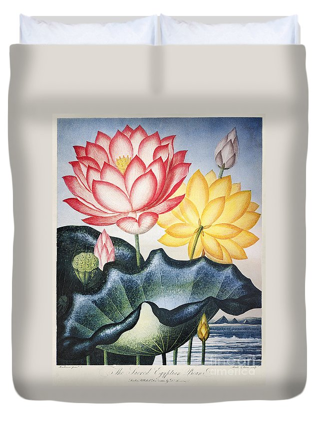 1804 Duvet Cover featuring the photograph Thornton: Lotus Flower by Granger
