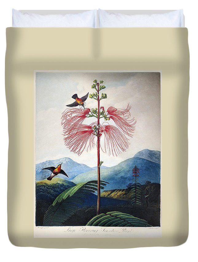 1799 Duvet Cover featuring the photograph Thornton: Sensitive Plant by Granger