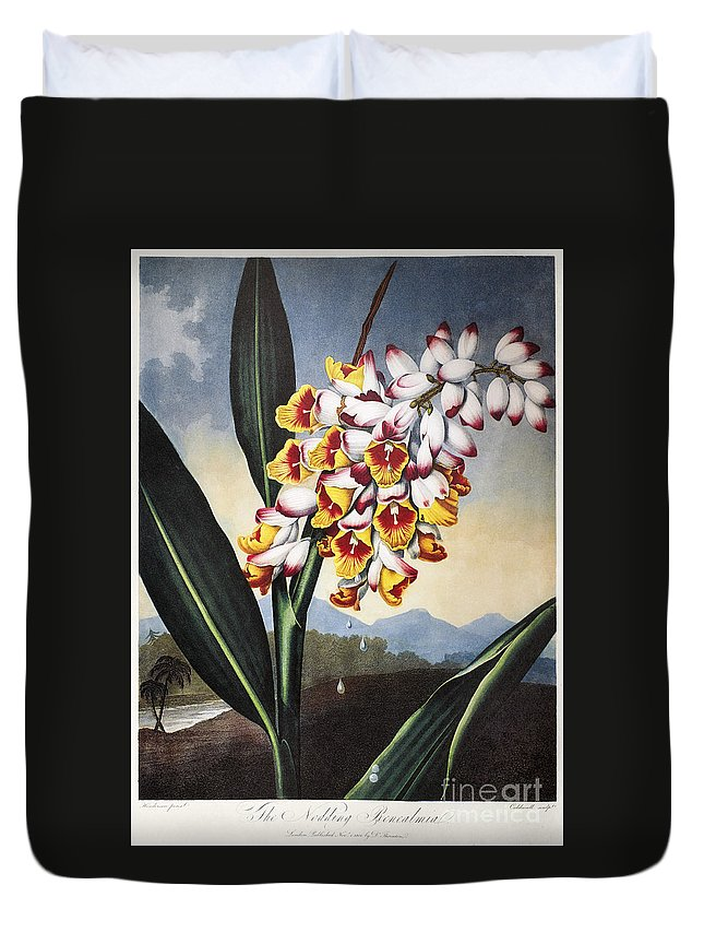 1801 Duvet Cover featuring the photograph Thornton: Shell Ginger by Granger