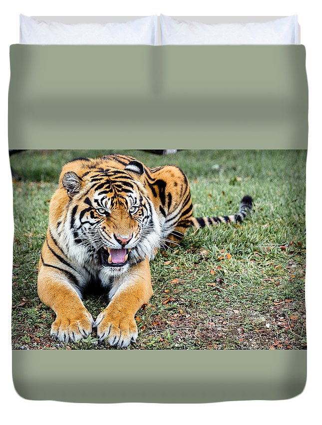 Tiger Duvet Cover featuring the photograph Those Days... by Albert Mendez