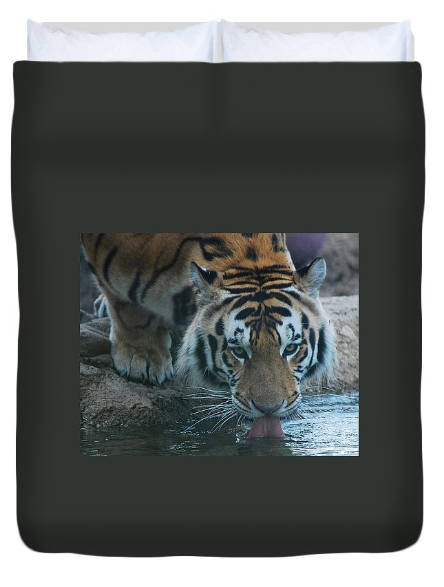 Fine Art Duvet Cover featuring the photograph Those Eyes by Maggy Marsh