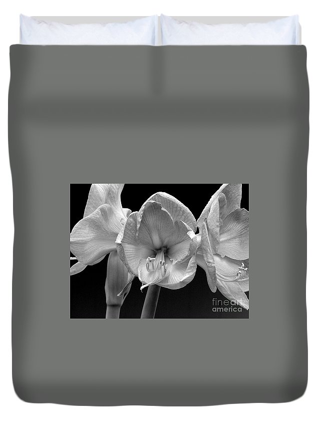 Amaryllis Duvet Cover featuring the photograph Three Amaryllis Black And White Print by James BO Insogna