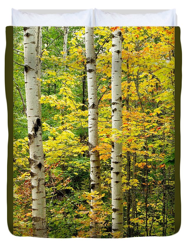 Birch Duvet Cover featuring the photograph Three Birch by Michael Peychich