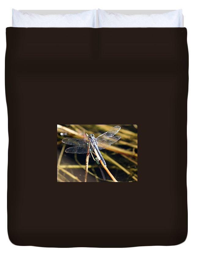 Dragonflies Duvet Cover featuring the photograph Three Dragonflies On One Reed by Carol Groenen