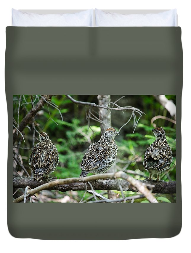 Spruce Grouse Duvet Cover featuring the photograph Three In A Row by James Petersen