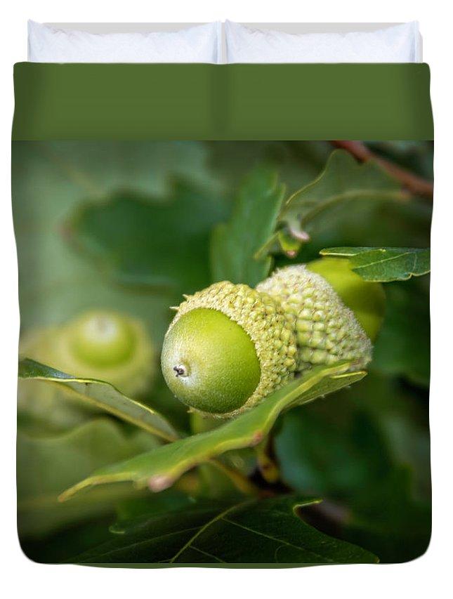 Green Duvet Cover featuring the photograph Three Oak Acorns by LeeAnn McLaneGoetz McLaneGoetzStudioLLCcom