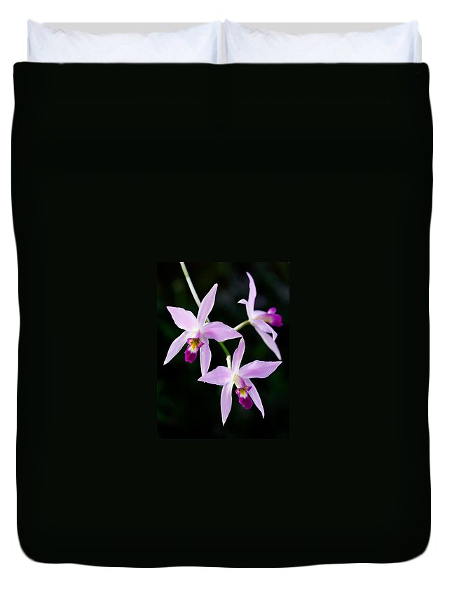 Orchid Duvet Cover featuring the photograph Three Orchids by Marilyn Hunt
