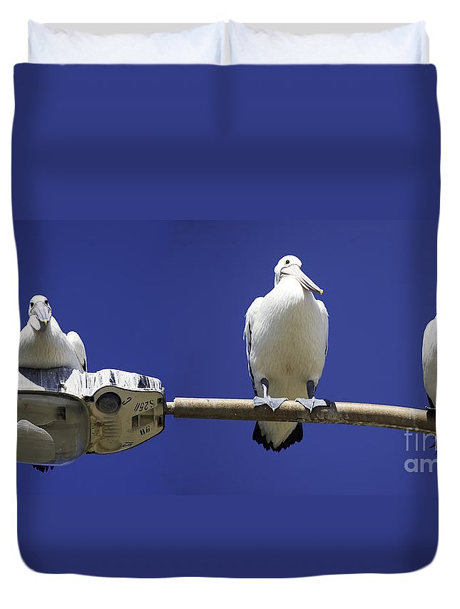 Australian White Pelicans Duvet Cover featuring the photograph Three Pelicans On A Lamp Post by Sheila Smart Fine Art Photography
