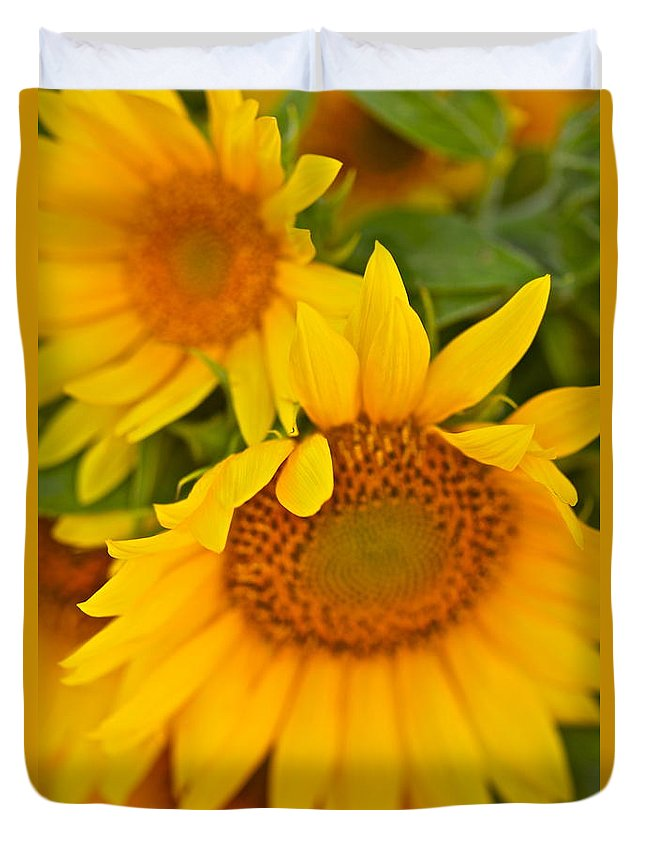 Yellow Duvet Cover featuring the photograph Three Sunflowers by Nadine Rippelmeyer