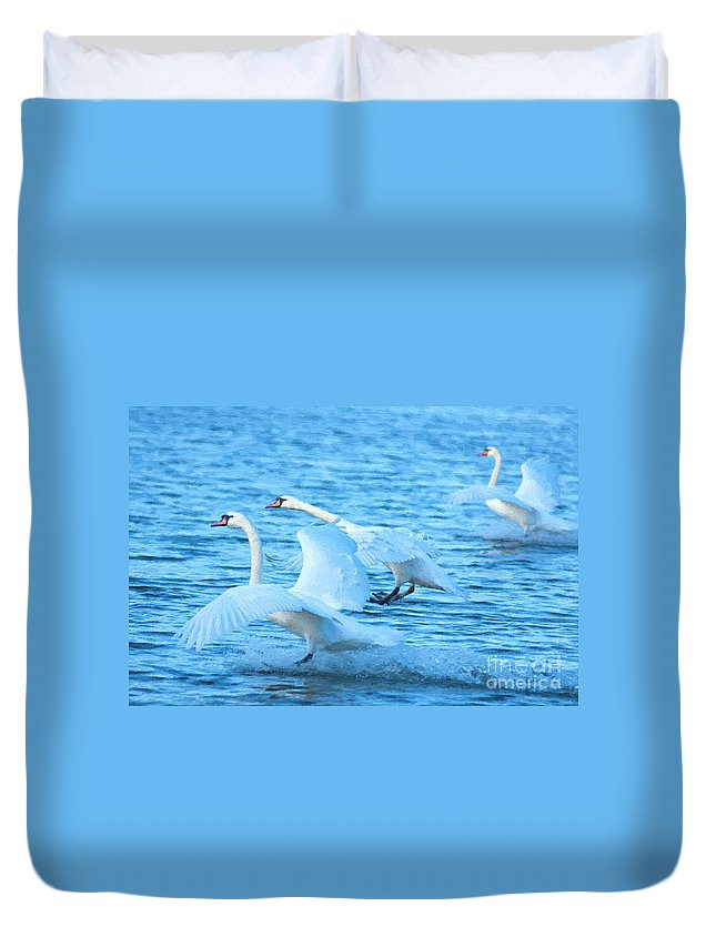 Three Duvet Cover featuring the photograph Three Swans by Andrew Michael