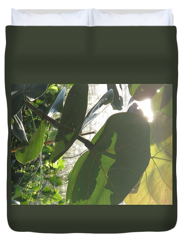Sea Duvet Cover featuring the photograph Through The Sea Grape Leaves by Ian MacDonald