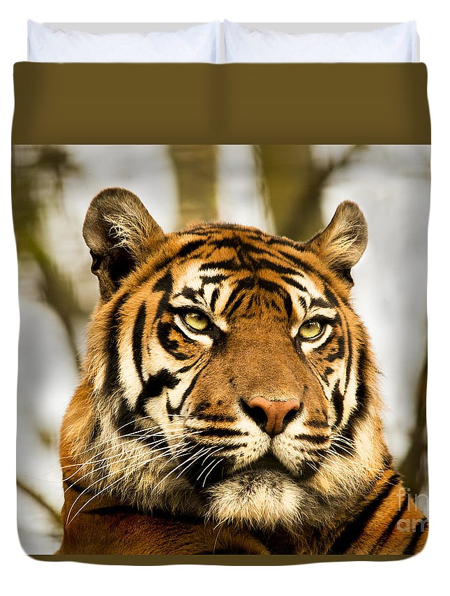 Tiger Orange Jungle Cats Feline Furry Zoo Duvet Cover featuring the photograph Tiger by Chris Wharmby