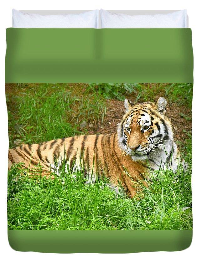 Tiger Duvet Cover featuring the photograph Tiger by Johnny Griffin