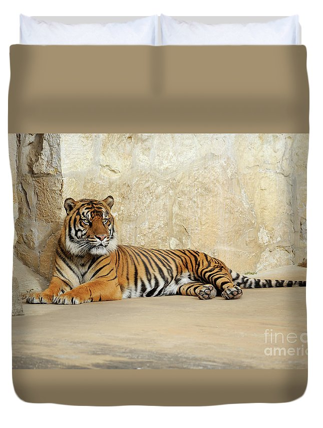 Sumatran Tiger Duvet Cover featuring the photograph Tiger Resting by Gunther Allen