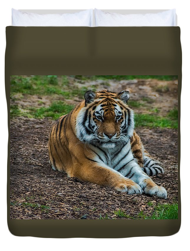 Tiger Duvet Cover featuring the photograph Tiger by Martin Newman