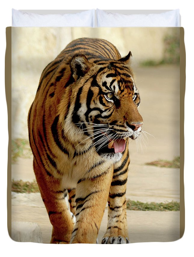 Sumatran Tiger Duvet Cover featuring the photograph Tiger Pacing by Gunther Allen