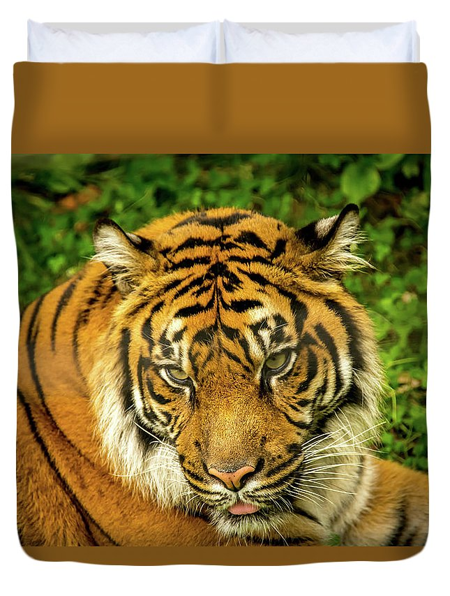 Animals Duvet Cover featuring the photograph Tiger by Tommy Jaksic