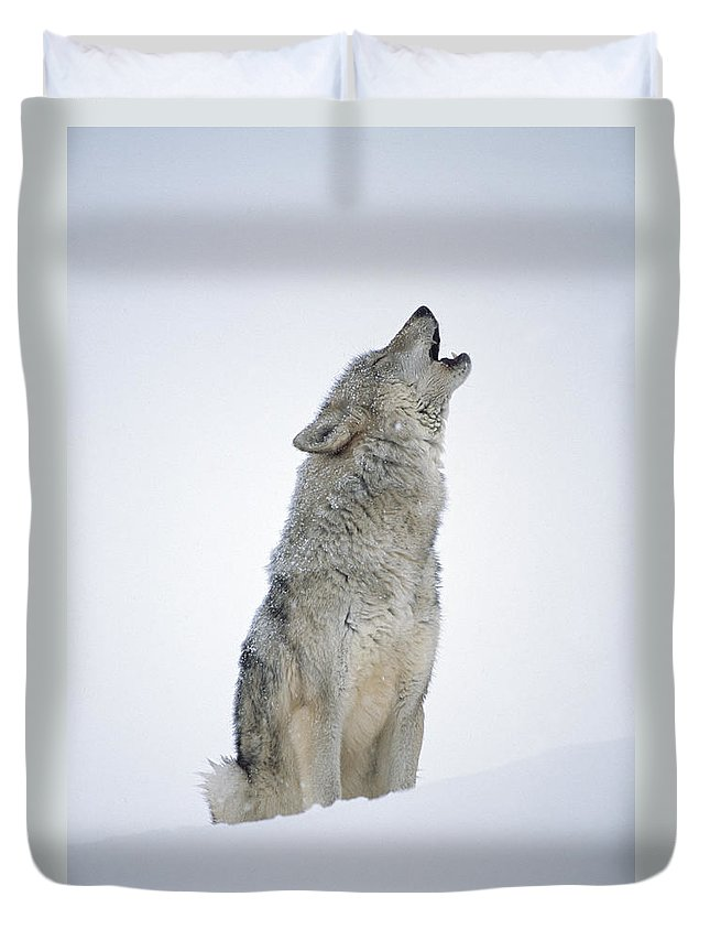 00174271 Duvet Cover featuring the photograph Timber Wolf Portrait Howling In Snow by Tim Fitzharris
