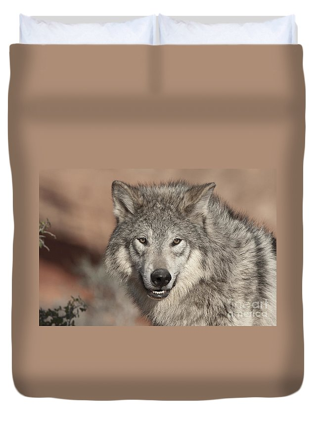 Wolves Duvet Cover featuring the photograph Timber Wolf Portrait by Sandra Bronstein