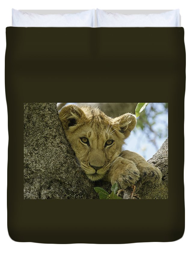 Africa Duvet Cover featuring the photograph Time for a Nap by Michele Burgess