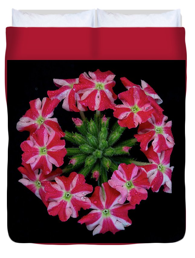 Bunch Of Flowers Duvet Cover featuring the photograph Tiny Bunch Of Red And Pink Flowers by Greg Thiemeyer
