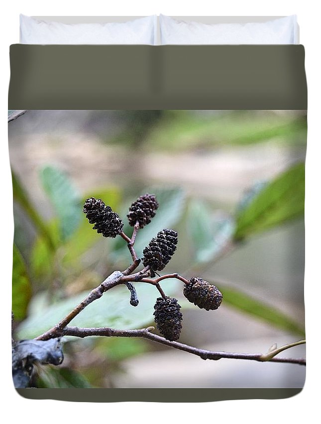 Pine Duvet Cover featuring the photograph Tiny Cones by Hannah Tanner