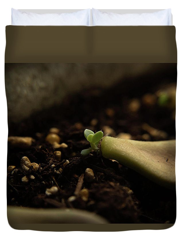 Propogating Duvet Cover featuring the photograph Tiny Succulent by Samantha Fuller