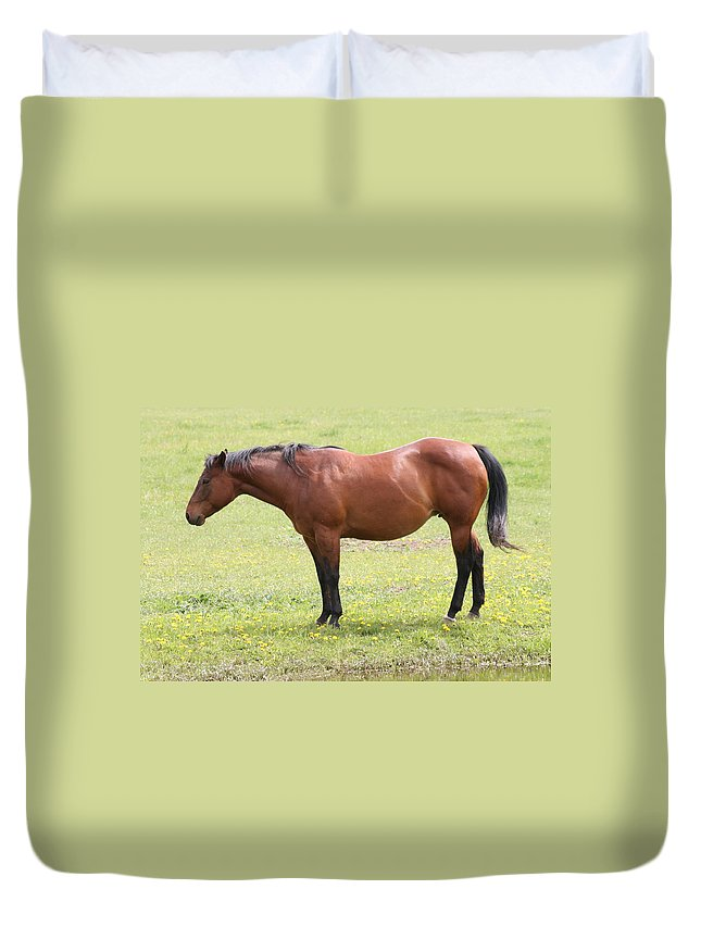 Horse Duvet Cover featuring the photograph Tired Horse by Tiffany Vest