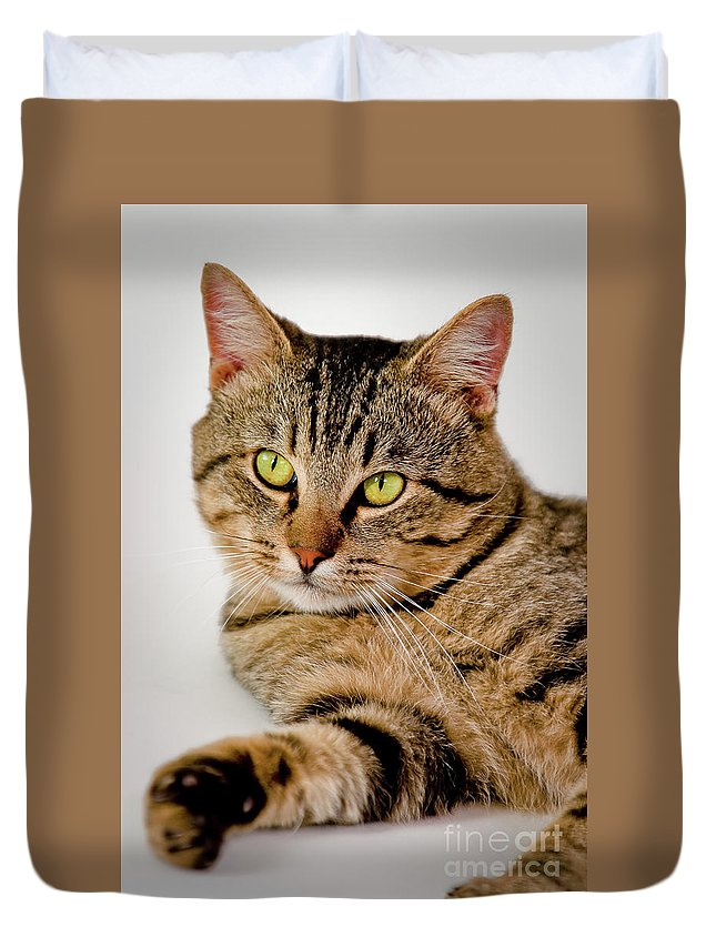 Cat Duvet Cover featuring the photograph Toby 2 by Dean Birinyi