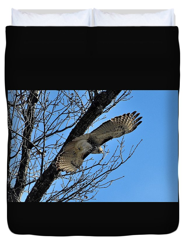Bird Duvet Cover featuring the photograph Todays Art 1994 by Lawrence Hess