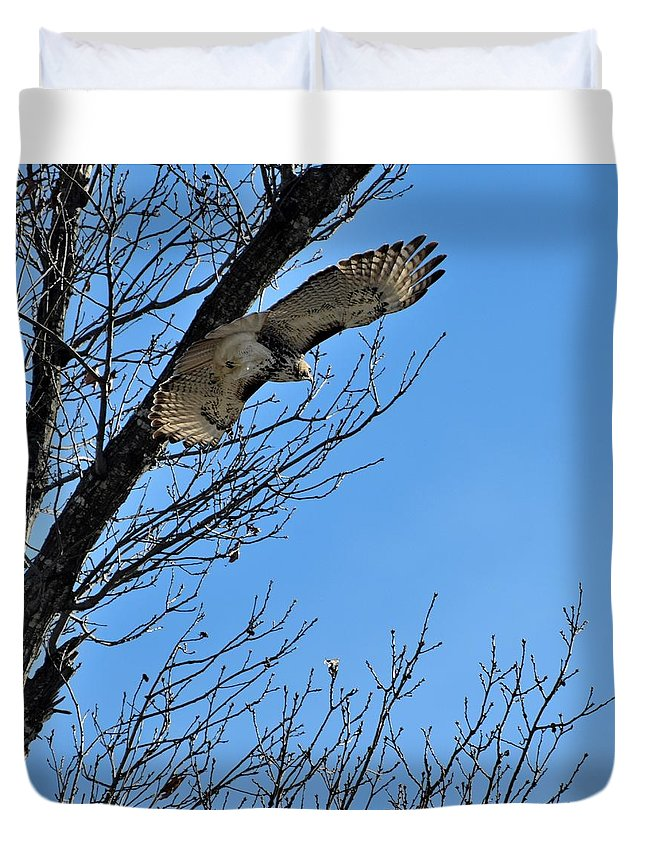 Bird Duvet Cover featuring the photograph Todays Art 1995 by Lawrence Hess